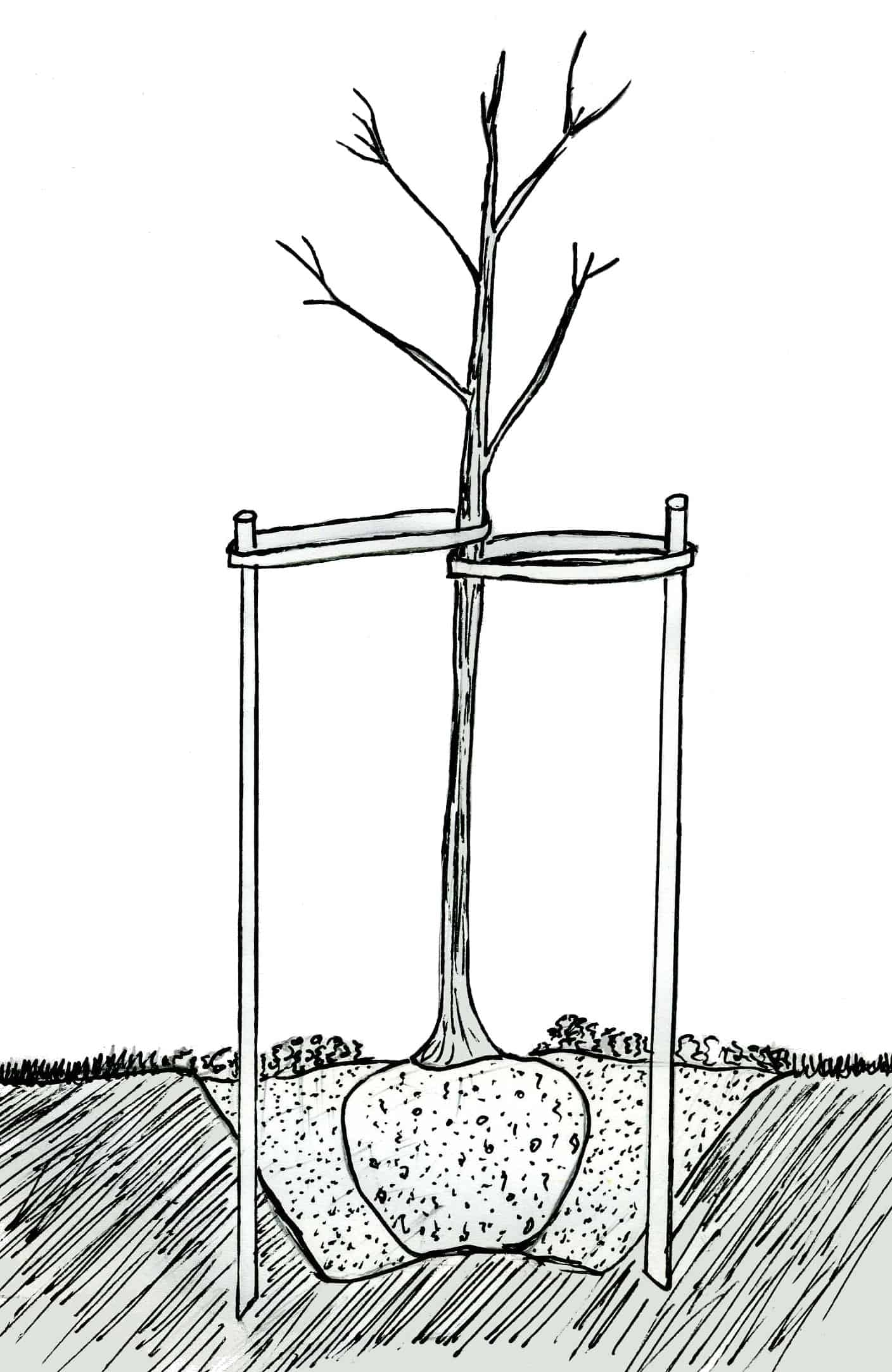 ВЫРАЩИВАНИЕ ВИШНИ.Как выращивать вишню? ВИДЕО 71